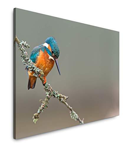 Paul Sinus Art Vogel 180 x 120 cm Inspirierende Fotokunst in Museums-Qualität für Ihr Zuhause als Wandbild auf Leinwand in XXL Format -