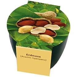 Premium-Pflanzset 'Erdnuss'