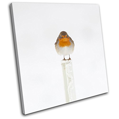 bold-bloc-design-robin-red-breast-animals-40x40cm-canvas-art-print-box-framed-picture-wall-hanging-h