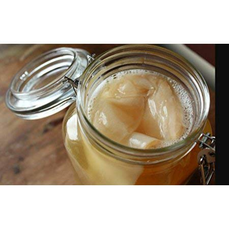 1 X Organic Kombucha Scoby - Live Culture by Scoby Kombucha by Scoby Kombucha