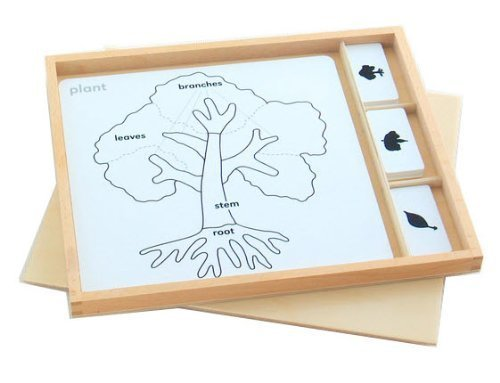 Montessori Botany Puzzle Activity Set by D & D Distributor