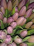 Ramo 20 Tulipanes Naturales Rosa para Regalar. PORTES GRATIS