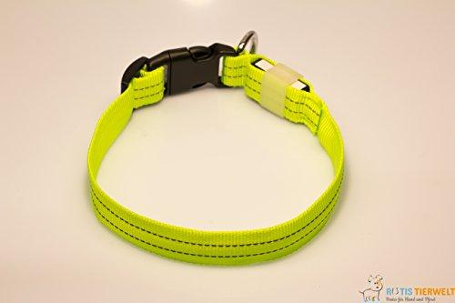 LED Leuchthalsband Basic 3 per USB aufladbar, Grün, Größe M