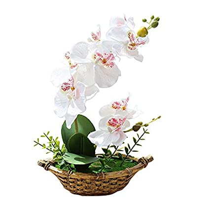 Womdee Phalaenopsis Orquídea Artificial Bonsai 27cm/10.6in, Maceta Orquídeas Artificial Flores Permabloom Artificial Flores con Jarrón Decorativo Exterior Uso para Boda Hogar Oficina Mesa Decoración