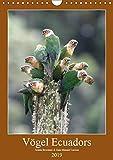 Vögel Ecuadors (Wandkalender 2019 DIN A4 hoch): Die unterschiedlichen Vogelarten vermitteln Ihnen einen Eindruck welche Artenvielfalt im Andenstaat ... (Monatskalender, 14 Seiten ) (CALVENDO Tiere) - Armin Brockner