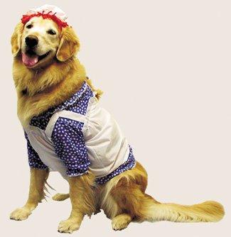 Hunde Für Dressing Up Kostüm - Morris Costumes Raggedy Ann Pet Kostüm