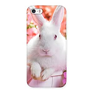 Spring Hare Back Case Cover for iPhone 5 5S