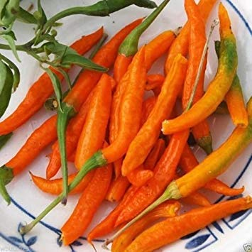 Pinkdose® ORANGE THAI, Chili/Chilli PEPPER (Capsicum annuum)- 20 SEEDS, Very rare !