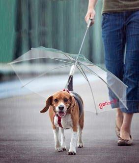 Freedog FD1200130 - Paraguas correa, para perro, color transparente