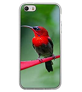 Fuson Designer Back Case Cover for Apple iPhone SE (colourful kingfisher natural beauty awesome)