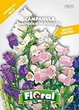 Sementi da fiore di qualità in bustina per uso amatoriale (CAMPANULA SEMPLICE IN MISCUGLIO)