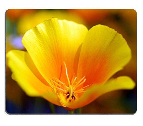 Liili Mouse Pad in gomma naturale mousepad immagine ID: 7609880isolato foto di un giallo California Papavero