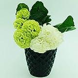 Better-way Diamant-Orchideen-Blumenkübel aus Keramik, rund, Sukkulenten-Blumentopf, Fensterbank, moderne Dekoration 6 inch schwarz