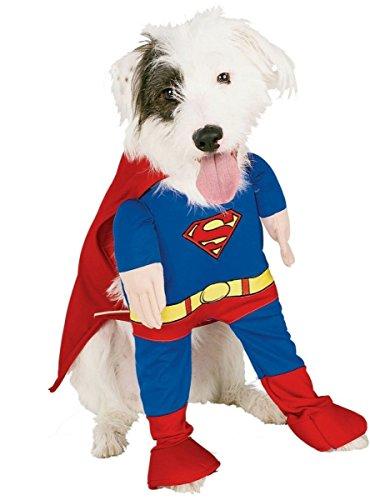 Superman-Kostüm Hund