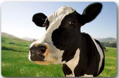 Milk Cow Door Mat Lovely Milch Kuh Weide Meadow Grassland Große Fußmatte Neopren-Rückseite Rutschfeste Outdoor Indoor Badezimmer Kitchen Decor Teppich Matte Welcome Fußmatte - Trocken-milch-bad