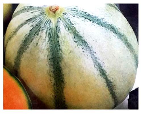 inception pro infinite 120 c.ca semi melone de charentais - cucumis melo in confezione originale prodotto in italia - meloni