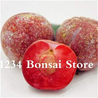 Bloom Green Co. Haute qualité 20 pcs Rare Noir Brin prune Bonsai fruit délicieux douce bio arbre & quot; krim noir & quot; Légumes et fruits Plante en pot: 7