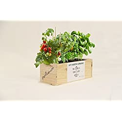 Kit de Huerto Urbano: Minicalabazas, Tomates Cherry y Albahaca