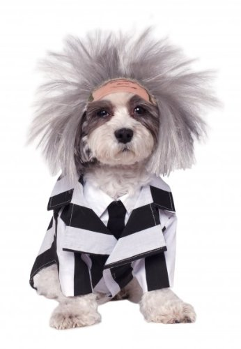 Funny Beetlejuice Pet Costume. in four sizes