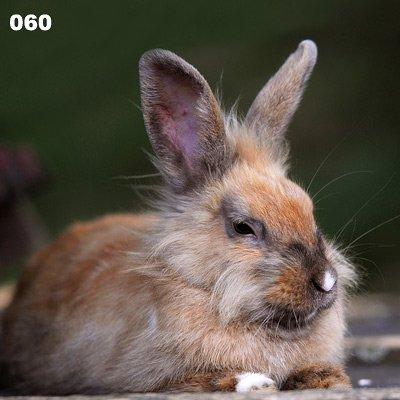 Kissen Kaninchen, Hase, Ostern