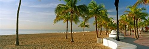 Panoramic Images - Palm trees on the beach Las Olas Boulevard Fort Lauderdale Florida USA Photo Print (45,72 x 15,24 cm)