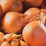 Premier Seeds Direct ORG078 Onion Struron Organic Seeds (Pack of 750)