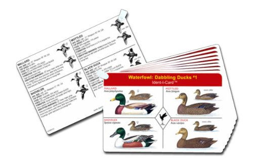 ab82e6c90c50f Waterfowl Ident-I-Cards - Set of 9 Freshwater Ducks and Geese  Identification Cards