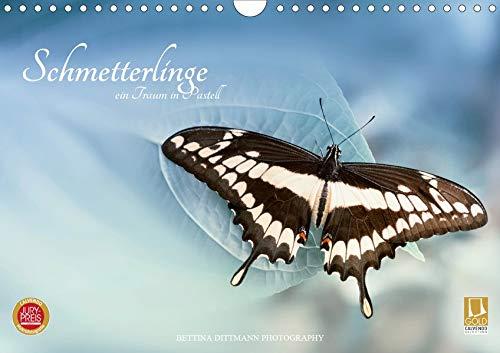 Traum Verträumte Schmetterlingsaufnahmen