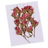 Baoblaze 20 Stücke Natürliche Gepresste Blume Verzierungen Trockenblumen getrocknete Rose Blumen für Dekoration DIY Scrapbooking