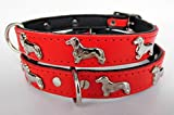 Lusy011 *DACKEL* Hunde Halsband, Leder, Halsumfang 28-31cm oder 36-41cm,* ROT 35cm (Halsumfang 28-31cm)