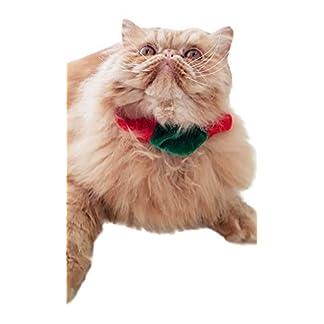 glamour girlz festive small dog & cat christmas xmas elf red green velvet collar Glamour Girlz Festive Small Dog & Cat Christmas Xmas Elf Red Green Velvet Collar 41tf6EmKrlL