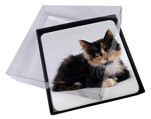 Advanta - Coaster Set 4X Nette Schildpatt -Kätzchen Bild Setzer gesetzt
