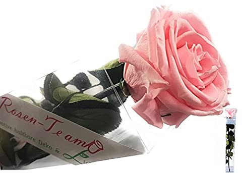 Rosen-te-amo Blume (Konservierte Rose) mit Grußkarte - ECHTE Blume - 3 JAHRE haltbare Rose OHNE WASSER - perfekt für den Blumenstrauß und Geschenk