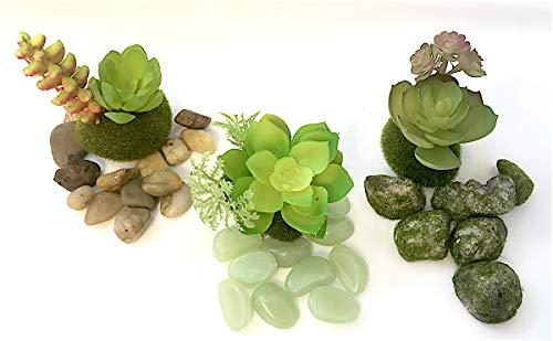 Terrarium Gardening (PaBu GuLi Künstliche Sukkulenten und Zubehör für Feengarten, Terrarium und Wohnaccessoires Green-red Tint)