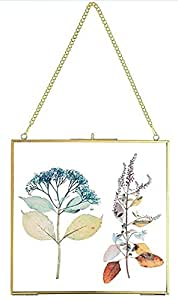Spaziomaker collection wall hanging photoframe of glass and metal for pressed flowers and posters (5 × 7) (Gold)