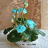Lotus-Samen, b Lotus Samen seltene Wasser Blume Pflanze Samen zum Anpflanzen Hausgarten - 5 Stück