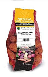 Autumn Planting Christmas Harvest Maris Peer Seed Potatoes 2KG (Approx. 20-25 tubers)  Maris Peer seed potatoes produce one of the most magnificent looking haulms ever seen. The flowers on the foliage are even scented which makes them unusual.  Maris...