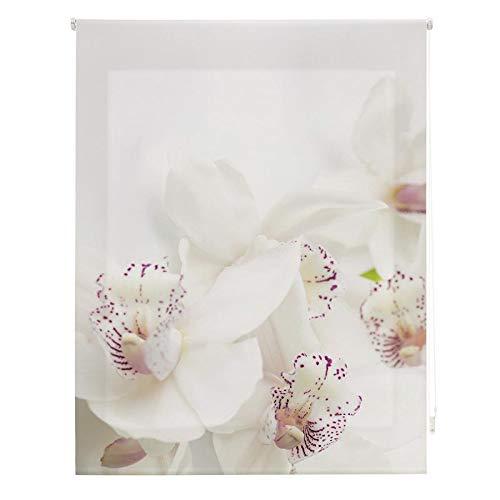 Homeflex Storalia - Estor Digital Salon orquidea, Enrollable, 180X180 cm - Disponible en Varias Medidas