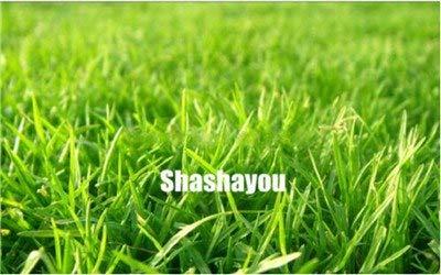 Bloom Green Co. 200 Pcs GAZONS Bonsai Golf de catégorie spéciale Evergreen Lawn Bonsai Terrains de soccer Villa haute Fleurs Etat Bonsai Jardin des plantes: 10
