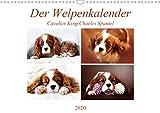 Der Welpenkalender - Cavalier King Charles Spaniel (Wandkalender 2020 DIN A3 quer)