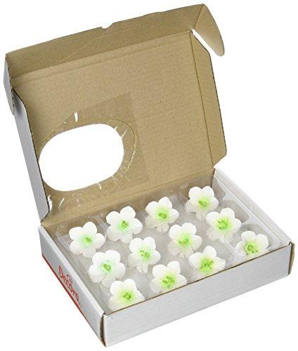 decora-paquet-12-azalee-blanc-avec-centre-vert-230-g