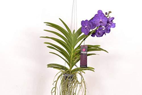 FloraStore 0188