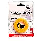 Schnuger Decorazioni di Halloween Regolabili Animali Flea Collari di Controllo dei parassiti Collari Anti Mosquito Collare per Small Medium Large Cat Pet - Arancione