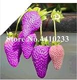 Go Garden 500 piezas de Escalada plantas de interior Bonsai Semillas Fresa gigante Escalada fruta para el Hogar & amp; Bricojardín raro para Bonsai: m