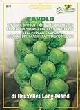 Nimai Garden Brussel Sprout Non-GMO Non-Hybrid Seeds, 5 g