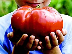 10 graines de tomates géante rouge envoi sous 48h
