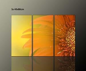 Fiori foto in brillanti colori 3 teilig wandbilder (estate 3 x 40 x 80 cm) ideale per fiori saluti da regalare foto pronta da appendere su telaio. Stampa artistica su tela con cornice, prezzo più valore come Poster