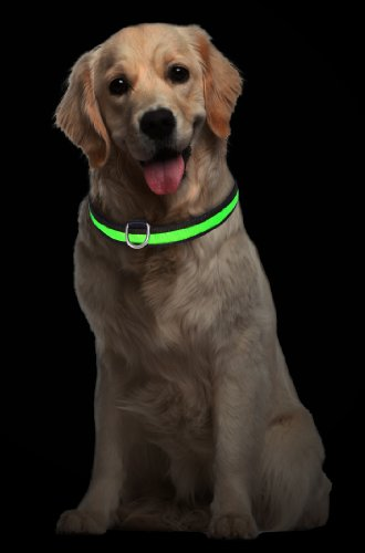 """Hunde Leuchthalsband LED Halsband Hundehalsband Hunde-Halsband """"Zandoo"""" Leuchthalsband für Hunde inkl. Batterie in der Farbe grün Haustiere Katzen Größe M (ca. 40-50 cm) NEU von der Marke PRECORN - 2"""