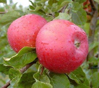 Apfel Gewicht