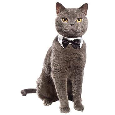 Doggie Style Store White Bow Tie Cat Kitten Collar – 5 Sizes